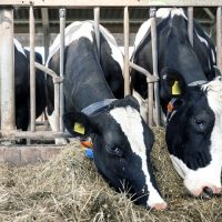 6 Best Ways to Buy Cattle Feeders for Sale